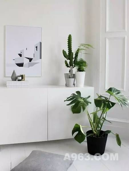 临近新年,你知道该放哪些植物在家里吗?