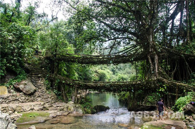 1. 活根桥, 梅加拉亚邦, 印度