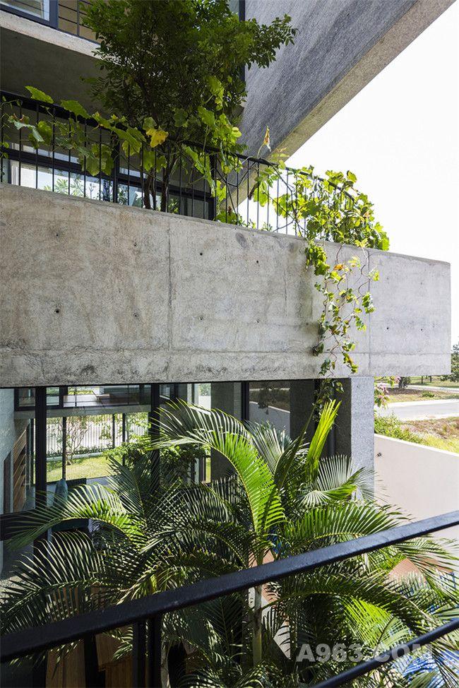 绿色植物充斥着住宅的每个地方