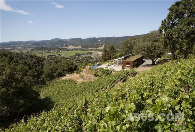 Cloverdale谷陡峭的南坡葡萄园里的住宅