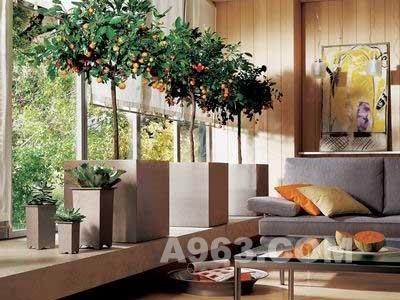 最全室内装修风水禁忌 wbr 为主人定做的法宝 高清图片