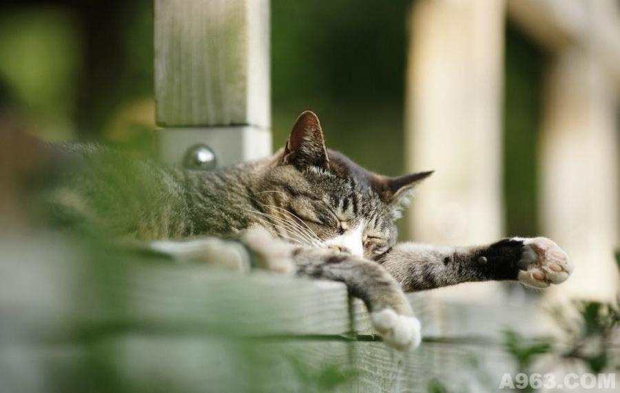 院落环境——睡猫