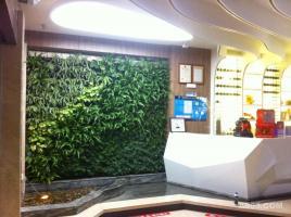 中贸广场 海鲜自助-植物墙