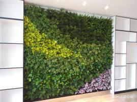 电力技校-教师休息室-植物墙