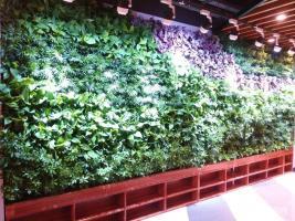 咸阳 MSE私享影院-植物墙
