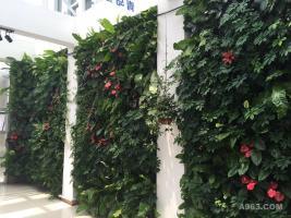 青岛董家口建筑设计院植物墙