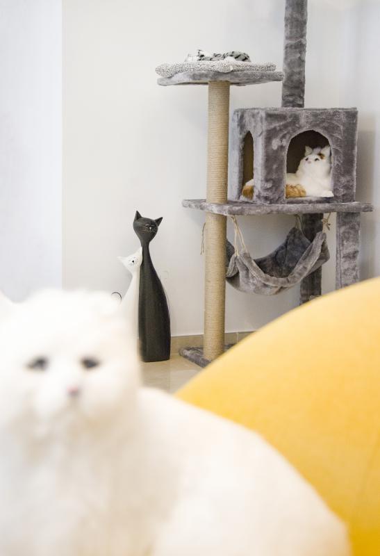 和我们一样,在不同的时辰 猫也会有自己的生活方式 于是依据猫的生活习惯 我们尝试在空间当中设置出猫的活动空间