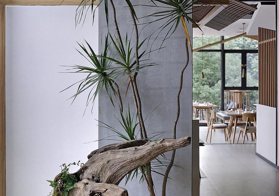 入口枯木配千年木造景,营造清幽、恬静的氛围